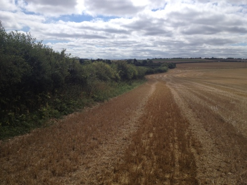 "Looking south along western side of hedgerow towards the northern tip of ""seven ditches"""