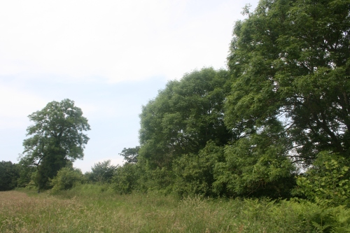 Trees along the north-west edge of the postulated burh...
