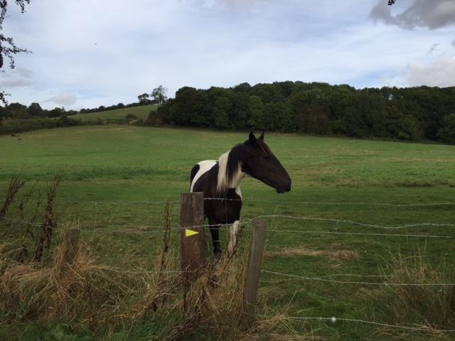 ockley-horse