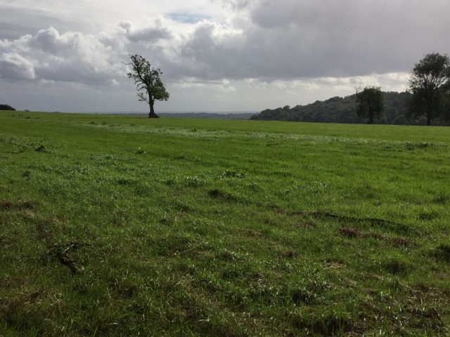 pastures-2